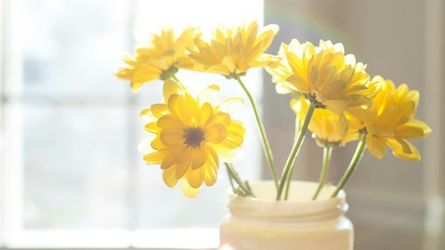 Yellow flowers tumblr gallery flower decoration ideas yellow flowers tumblr image collections flower decoration ideas yellow flowers tumblr gallery flower decoration ideas yellow mightylinksfo